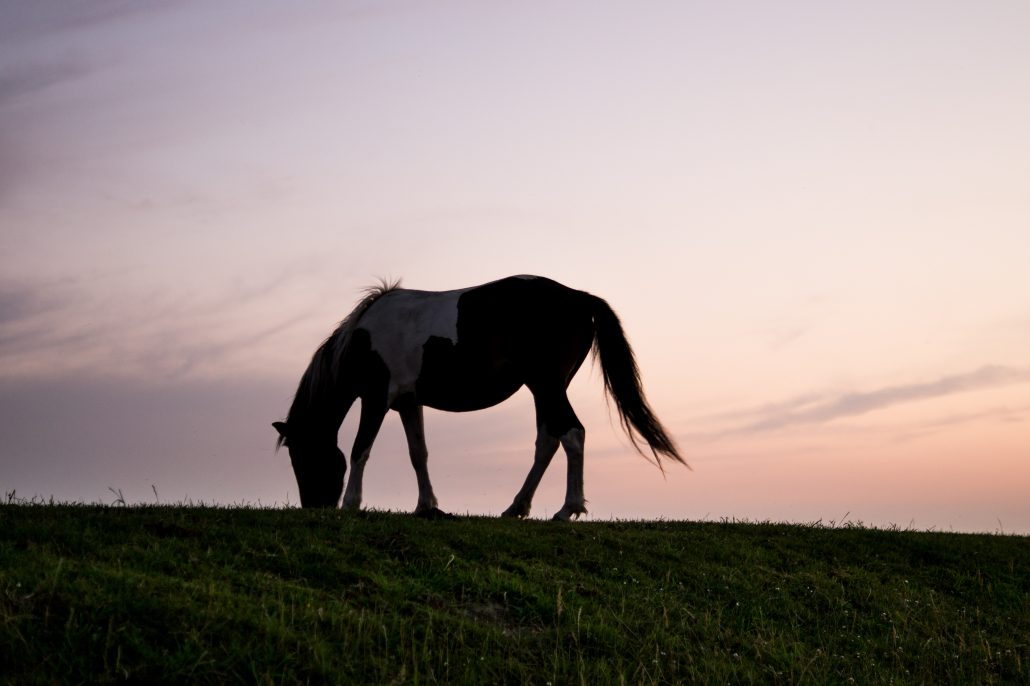 hestefoder-forhandlere-importoerer-forretninger-butikker-webshops-hesteblog